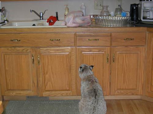 Rufus & Turkey
